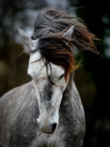 Wild Horse | www.1000strands.com