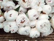 Wild Life | Mary Oliver | www.1000strands.com